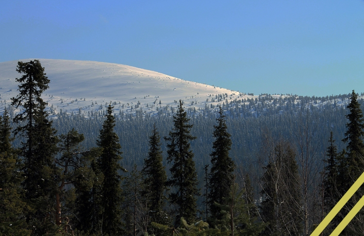 Snow topped fell in distance with nordic forest foreground, original photo by Harald Arlander